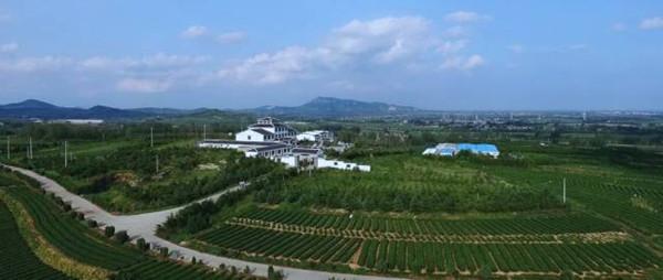凇晨茶文化园