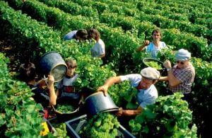 法国葡萄酒产区