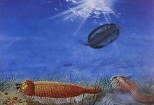 昆虫远祖的远祖----抚仙湖虫生态景观