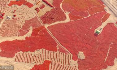 Red chili sea in Xinjiang