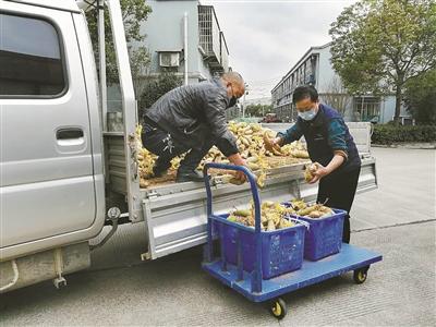 新北仑人驱车1000公里送来800公斤萝卜
