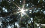 山东今年的春天缘何格外长 未来一周气温回升 大部地区30℃以上