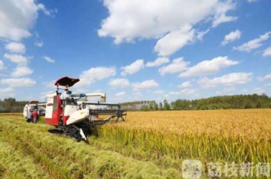 江苏夏粮面积减少单产提高 总产同比增加6亿斤