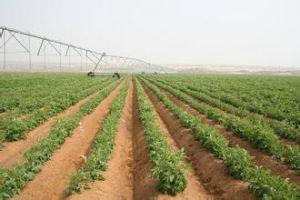 马铃薯种植地