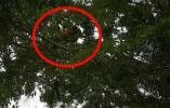 大树上竟挂着个人…咋回事?!14名消防员出动
