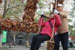 三潭印月上岸、秋千8米高、银杏林巨靴……网红秋叶打卡点,错过等一年!