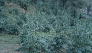 登峰绿野生态园区