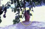还记得98年洪水中的抱树女孩吗?她的新身份竟是……