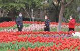 """赏春光!温州市区公园有序开放 市民出门""""透气"""""""