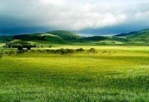 巴彦呼项草原