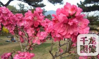"""初春风光好 ?#26412;?0处最佳""""春景""""景观"""