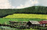绘画|富阳永兴中学八(7)班俞米乐:《绿野小屋》