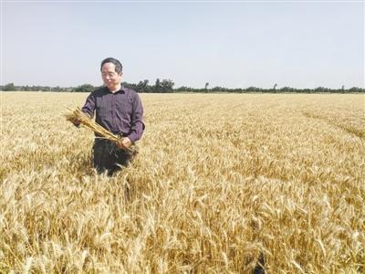 """""""农民教授""""吉万全:育出陕西""""最贵""""的小麦种子"""