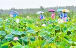 南京美丽乡村线上定向赛龙潭站开场,邀您一同体验乡野农趣!