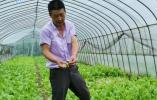 葡萄裂果、早稻开镰延迟...这个梅雨季 宁波农户蛮