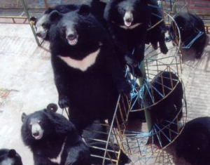 牡丹江黑宝熊乐园度假区