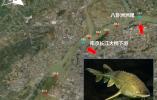 鱼儿回来了! 长江江苏段水生生物多样性有所恢复
